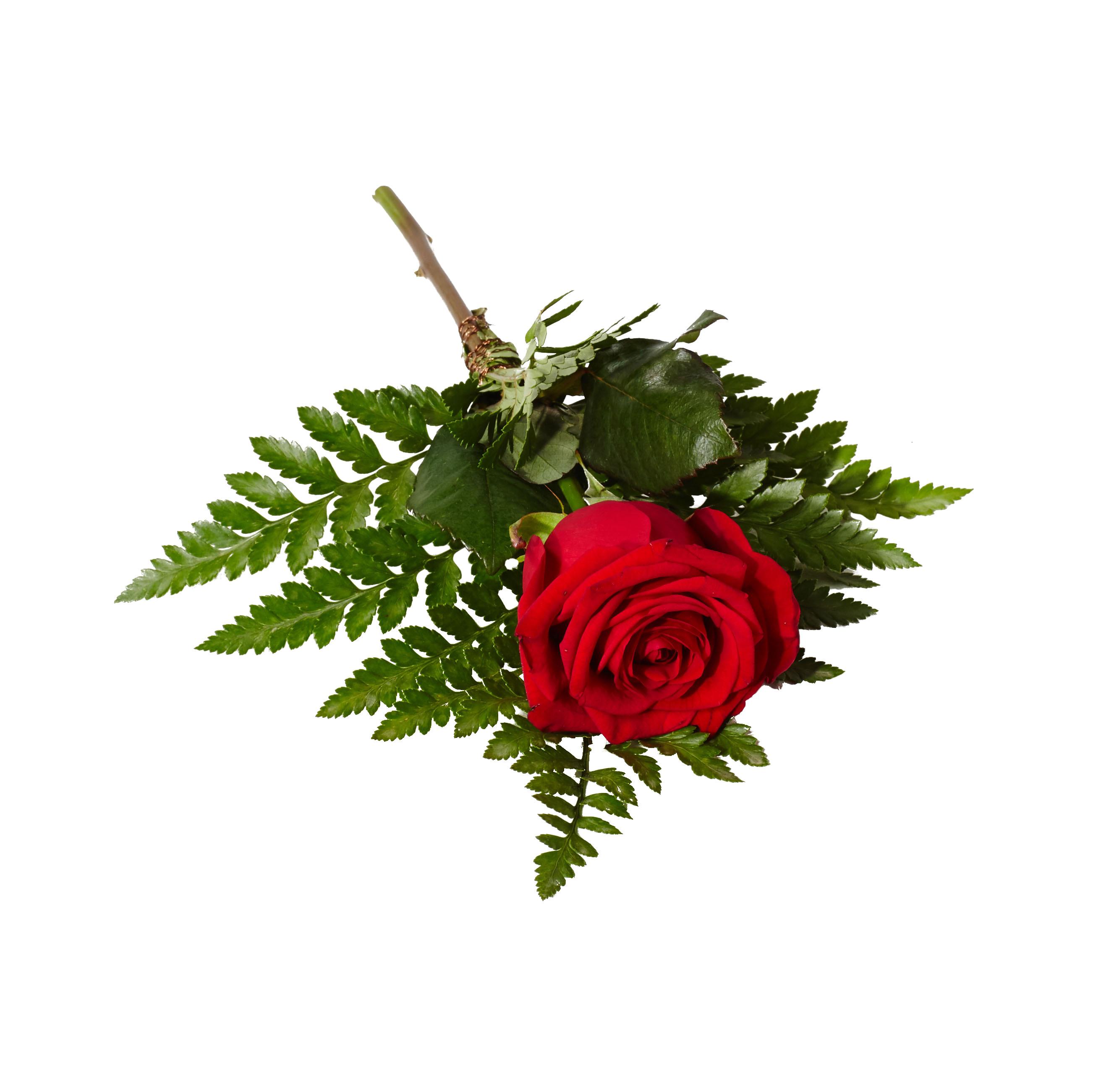 Klassisk handblomma bestående av röd ros med ett läderblad liggandes på en vit bakgrund,Blomman används som en handbukett och är även en begravningsblomma.
