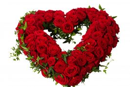 Begravningsblomma i form av ett öppet hjärta med röda stora rosor och murgröna som slingrar sig runt och igenom hjärtat. Hjärtat är i mitten av en vit bakgrund och är en sorgdekoration.