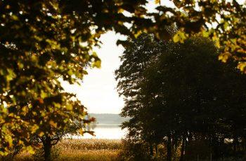 Lavendla-begravningsbyrå-skogsdunge-och-horisont