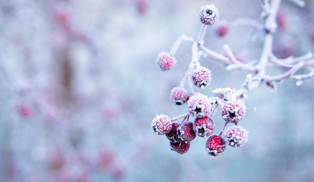 God Jul från Lavendla 2