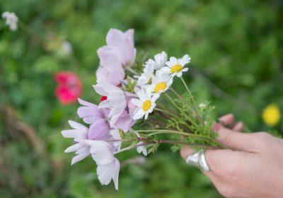 9 fina blommor till graven i vår