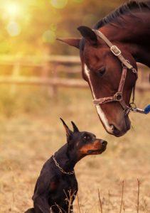 Köpekontrakt häst och hund