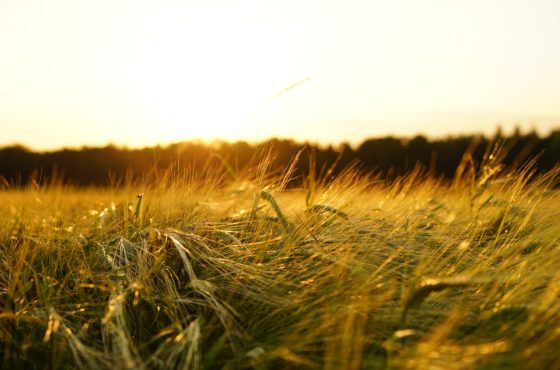 Jordbruksarrende